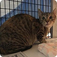 Adopt A Pet :: Kaleidoscope - Janesville, WI