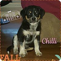 Adopt A Pet :: Chilli - Walker, LA