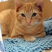 Adopt A Pet :: Gregg - Aiken, SC