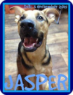 German Shepherd Dog Mix Dog for adoption in Jersey City, New Jersey - JASPER