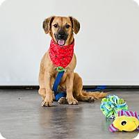 Adopt A Pet :: Sandy - Victoria, BC