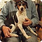 Adopt A Pet :: Prancer