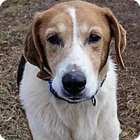 Adopt A Pet :: Wesley - Fairfax, VA