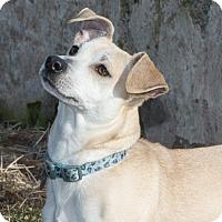 Adopt A Pet :: King - Elmwood Park, NJ