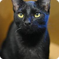 Adopt A Pet :: Carmen - Aiken, SC