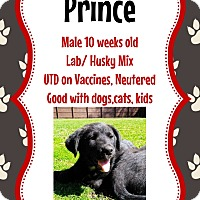 Adopt A Pet :: Prince - New Haven, CT
