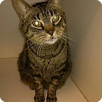 Adopt A Pet :: Gracie - Odenville, AL