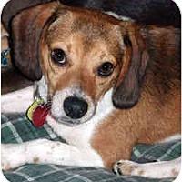 Adopt A Pet :: Gordon - Novi, MI
