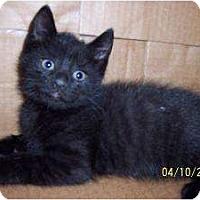 Adopt A Pet :: Joey - Island Park, NY