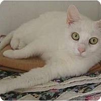 Adopt A Pet :: Echeo - Monroe, GA