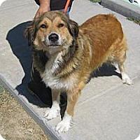 Adopt A Pet :: Sophie - Riverside, CA