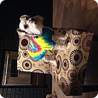 Adopt A Pet :: Jagger - Hazard, KY