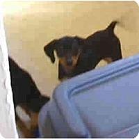 Adopt A Pet :: Kaylie - Chandler, IN