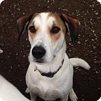 Adopt A Pet :: JAX~PENDING! - North Vancouver, BC