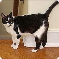 Adopt A Pet :: Quiz - Trevose, PA