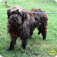 Adopt A Pet :: Crosby - Alpharetta, GA
