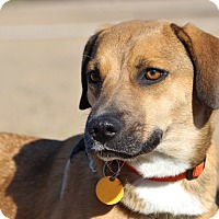 Adopt A Pet :: Adele - Pinehurst, NC