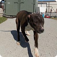 Adopt A Pet :: Talib - Lewisburg, TN