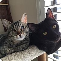 Adopt A Pet :: Bucky - Nuevo, CA