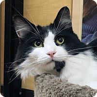 Adopt A Pet :: Schroeder - Irvine, CA