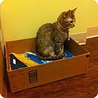 Adopt A Pet :: Reddi Freddi - The Colony, TX