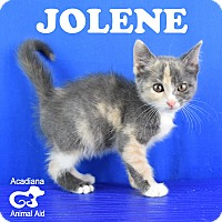 Adopt A Pet :: Jolene - Carencro, LA