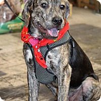 Adopt A Pet :: Lucy - Albemarle, NC