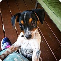 Adopt A Pet :: Flash - Florence, KY