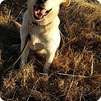 Adopt A Pet :: Yeller Dawg - Pulaski, TN