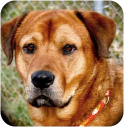 Rusty Moore | Adopted Dog | 1928213 | New Richmond,, WI ...