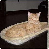 Adopt A Pet :: Olive - Springdale, AR