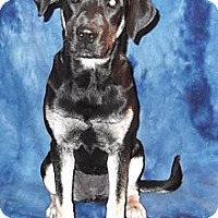 Adopt A Pet :: Dixie - Pawling, NY