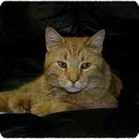 Adopt A Pet :: Oliver - Lake Ronkonkoma, NY