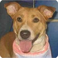 Adopt A Pet :: Dalila - Kingwood, TX