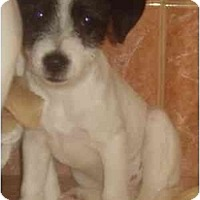 Adopt A Pet :: Felicity - Miami, FL