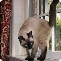 Adopt A Pet :: Marissa - Davis, CA