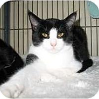 Adopt A Pet :: Casper - Shelton, WA