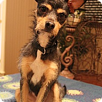 Adopt A Pet :: Murphy - Hagerstown, MD