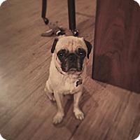 Adopt A Pet :: Squiggy - Austin, TX