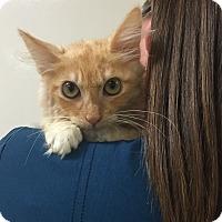Adopt A Pet :: Huntington - Mission Viejo, CA