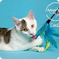 Adopt A Pet :: Cody - Pearland, TX