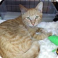 Adopt A Pet :: Raymond - Gilbert, AZ
