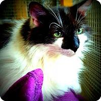 Adopt A Pet :: Panda - Scottsboro, AL