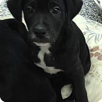 Adopt A Pet :: River - Washington, PA