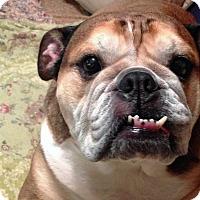 Adopt A Pet :: Kahula - Strongsville, OH