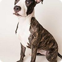 Adopt A Pet :: *PENELOPE - Sacramento, CA