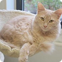 Adopt A Pet :: Tam Tam - Mocksville, NC