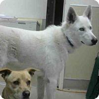 Adopt A Pet :: GHOST - Martinez, CA
