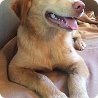 Adopt A Pet :: Emmy - SOUTHINGTON, CT