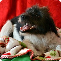 Adopt A Pet :: Sammie - Okeechobee, FL